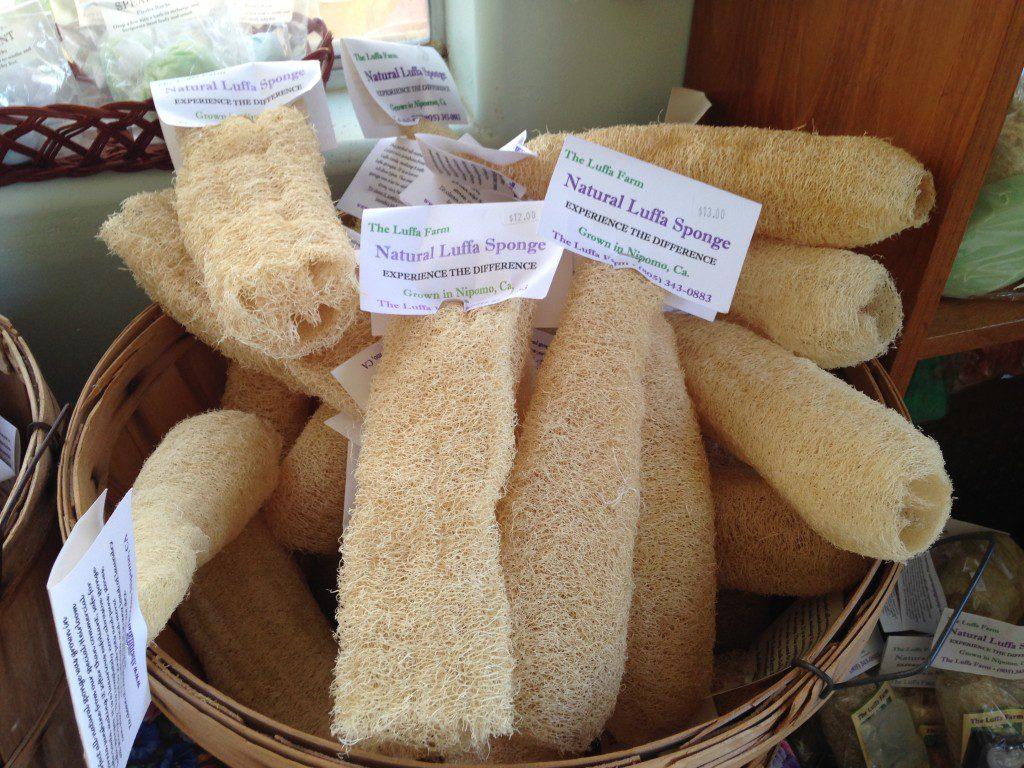 The Luffa Farm We Grow Sponges California Curiosities