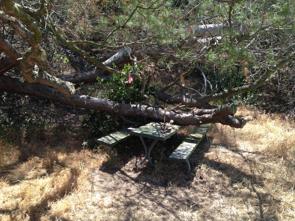 Haunted Picnic Table