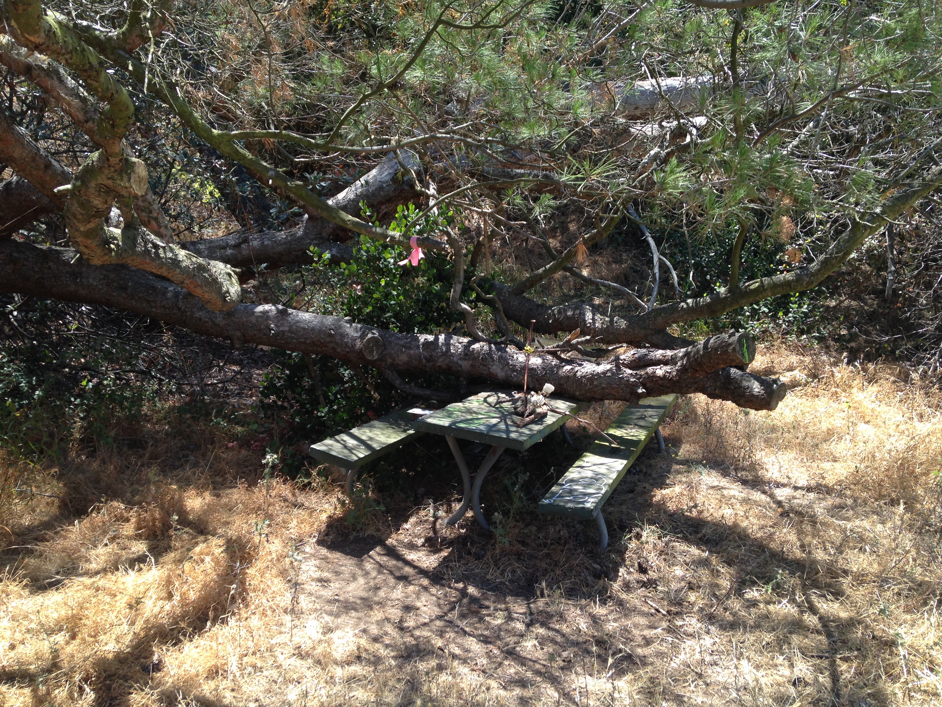 HAUNTED PICNIC TABLE 29: Chasing Horny Ghosts and Urban