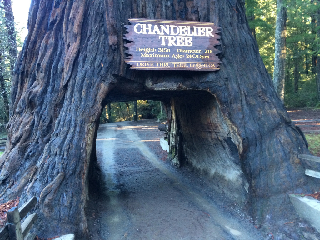 World famous chandelier tree california curiosities map data arubaitofo Choice Image